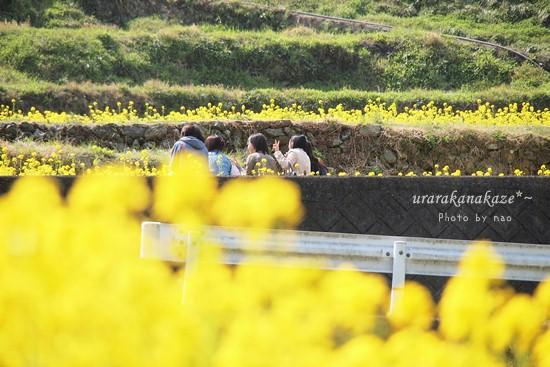 神山町江田の菜の花