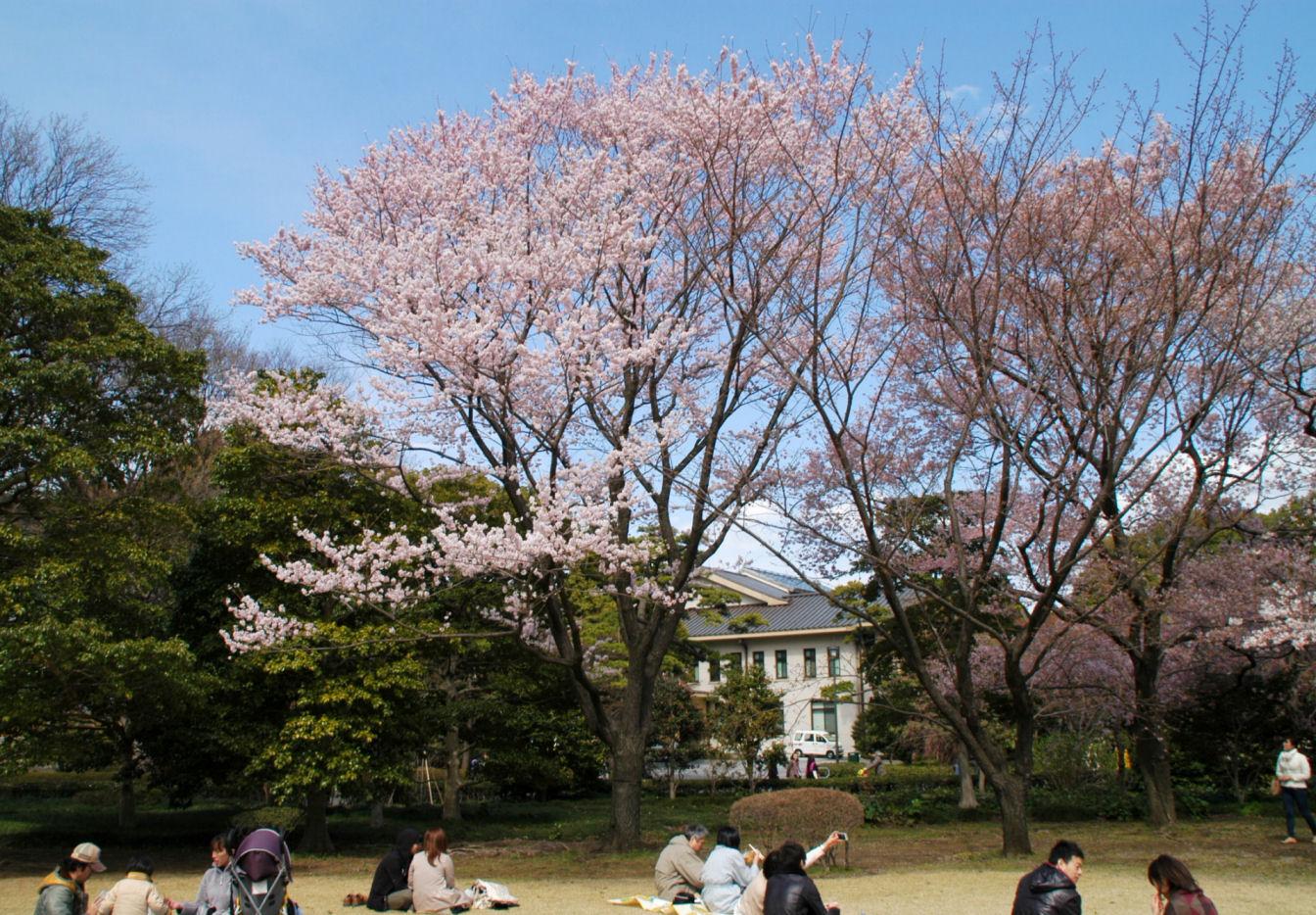 higashigyoen249.jpg