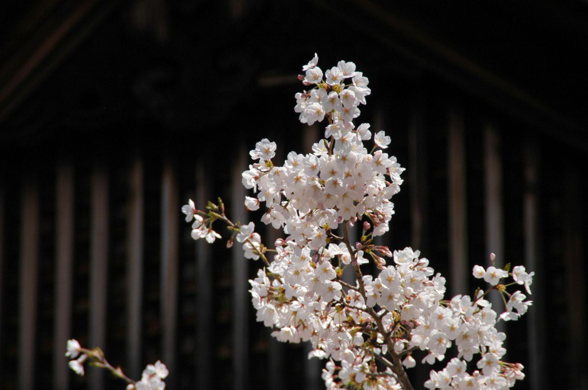 yasukuni0141.jpg