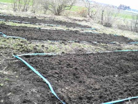 堆肥をいれた畑。