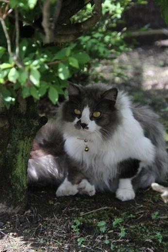 猫、現る。 (3)