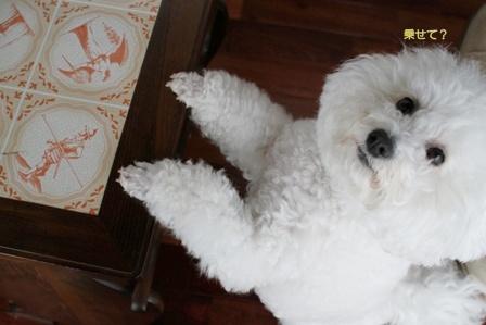 乗りたがる犬 (2)
