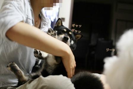 嫌がる犬。 (4)