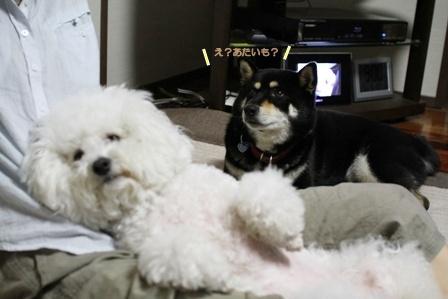 嫌がる犬。 (3)