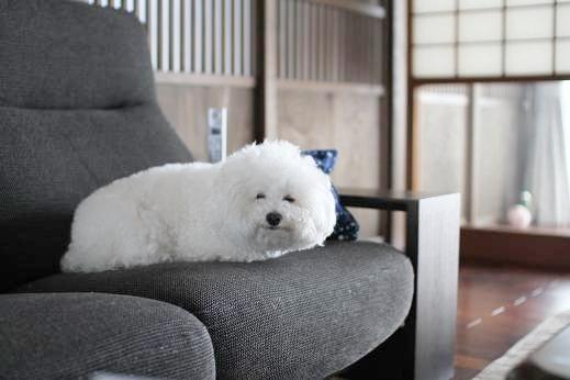 白い●●ムシ (2)