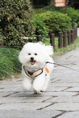THE PENINSULA TOKYO 滞在記 ~早朝散歩とか朝ごはんとか~