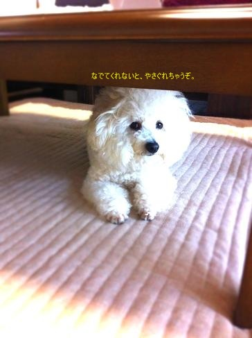 タチの悪い犬 (2)