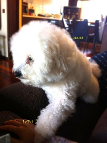 タチの悪い犬 (3)