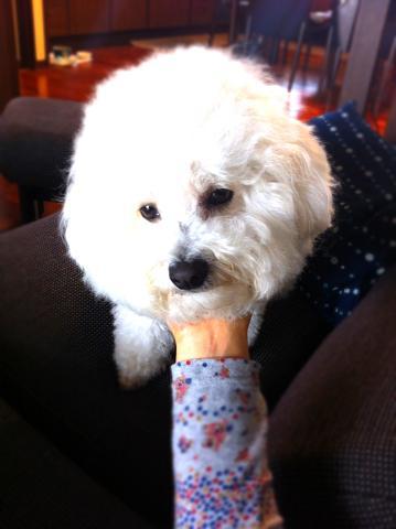 タチの悪い犬 (1)
