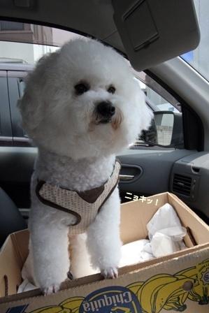 車と犬 (4)