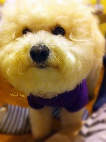 いつでも迫り来る犬 (3)