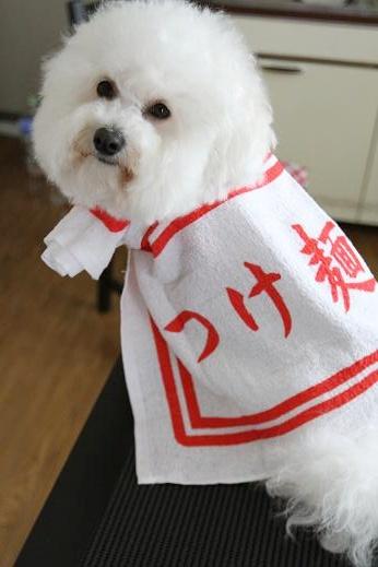 記念品で遊ばれる犬 (6)