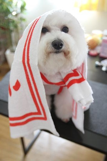 記念品で遊ばれる犬 (4)