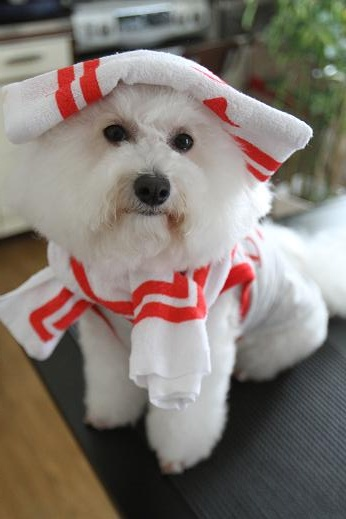 記念品で遊ばれる犬 (2)