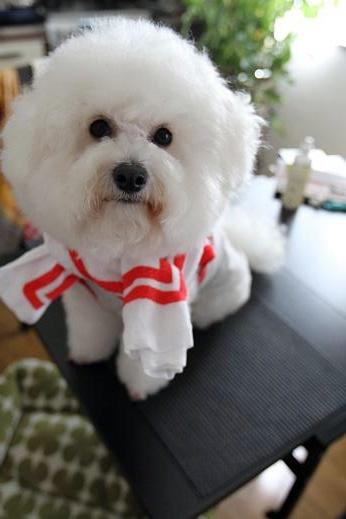 記念品で遊ばれる犬 (1)