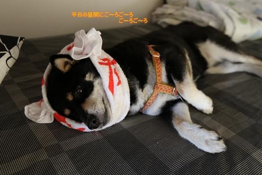 つけ麺坊主犬、再び!? (5)