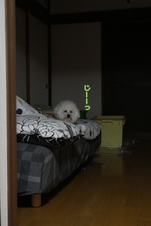 寝る前のお誘い (2)
