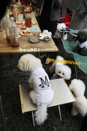 モフ☆キャン 2012 ~番外編 乗りたがる犬!~  (5)