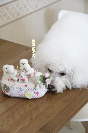 みんな~、集合~~っ! (4)