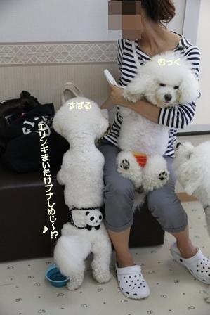 WANDRY★ATTACK ~お遊び編~ (3)