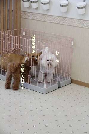 WANDRY★ATTACK ~お遊び編~ (2)