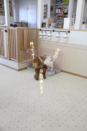 WANDRY★ATTACK ~お遊び編~
