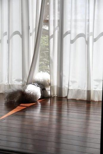 セコム犬 (1)