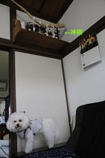 神棚と犬 (2)