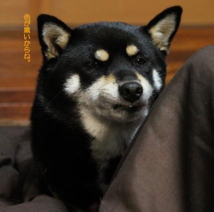 ブログ不適格犬
