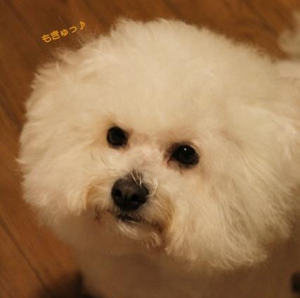 ブログ不適格犬 (2)