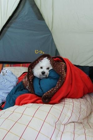 寒がりな犬 (2)