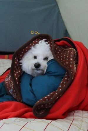 寒がりな犬 (3)