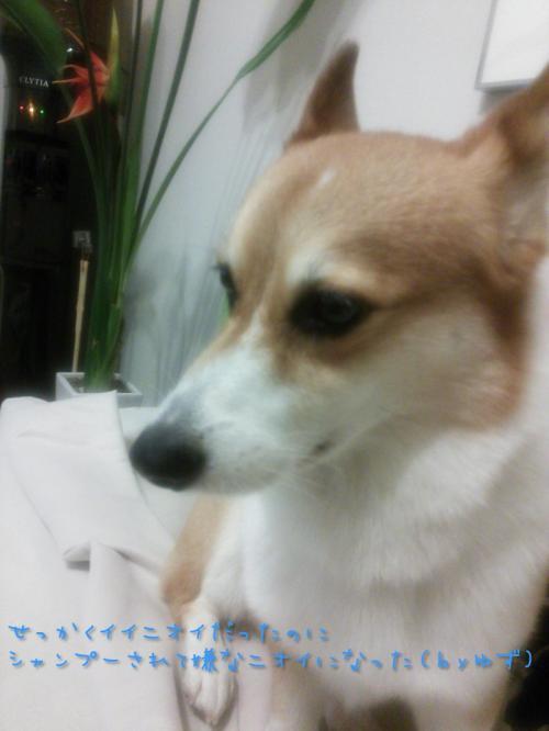 yuzu_20130920230744a6d.jpg