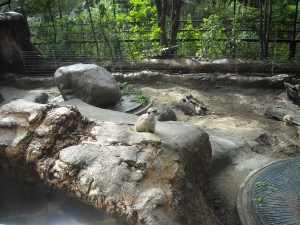 四国 高知 のいち 動物園 ミーアキャット