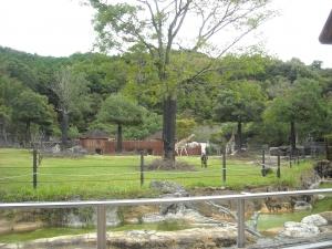 四国 高知 のいち 動物園