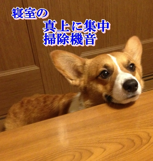 IMG_6552.jpg