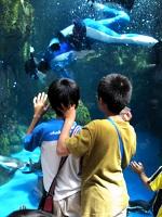 京都水族館2