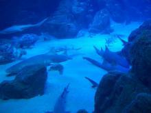 16:02 パノラマ大水槽には、サメが多いです。