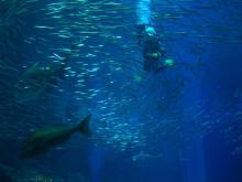 16:31 水槽の中の魚とダイバー ^^;