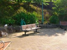 16:29 長崎は猫が多いです。(ここに7匹います)
