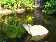 17:20 カメ池の亀の像の上に、本物の亀が載っています。