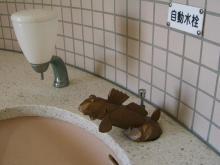 13:41 お手洗いの蛇口もムツゴロウ