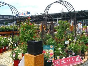 河本バラ園は、来週こられる大野耕生先生のおばさんのバラ園だそうです。