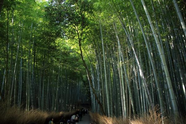 14.11嵐山6D (118)