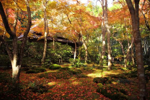 14.11嵐山6D (126)