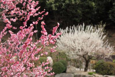 13_03_17_BotaniclGarden_5Dm20010.jpg