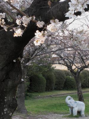 13_03_25_Sakuramori_G120007.jpg