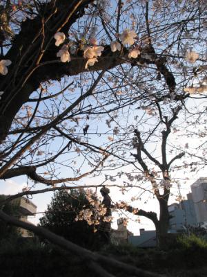 13_03_25_Sakuramori_G120014.jpg