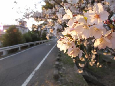 13_03_25_Sakuramori_G120015.jpg