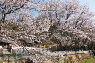13_04_02_MishoSokakuji_5Dm20001.jpg